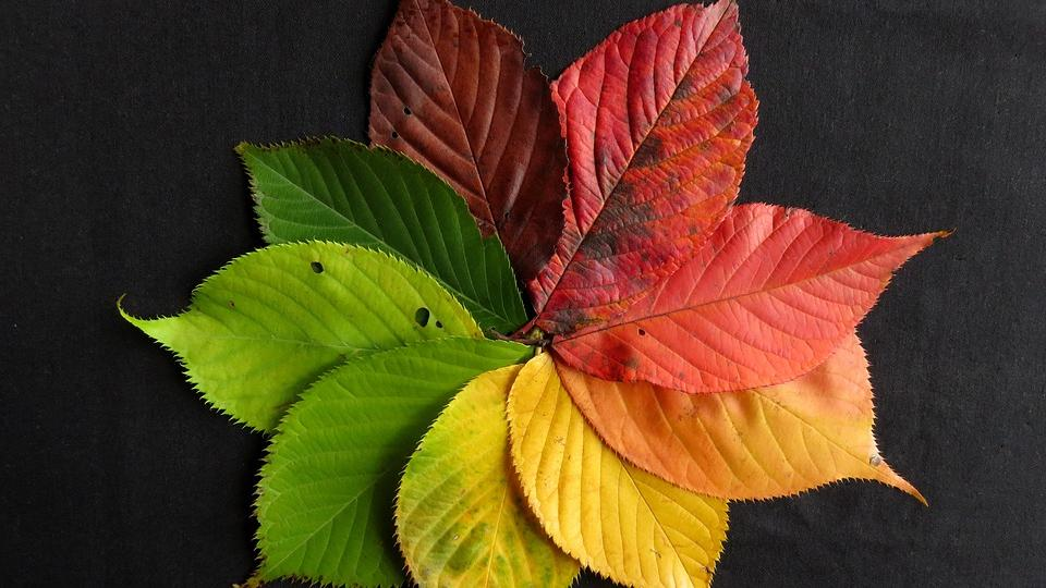 Multi-colored leaves arranged in a circular pattern