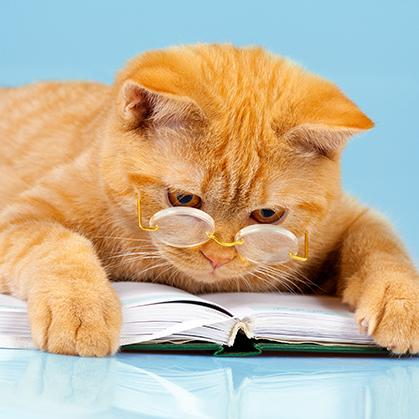 Cat studying.